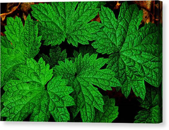 Green Burst Canvas Print by James Hammen