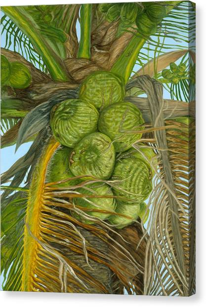 Green Coconut Canvas Print