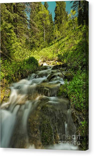 Green Colors And A Stream Canvas Print by Mitch Johanson