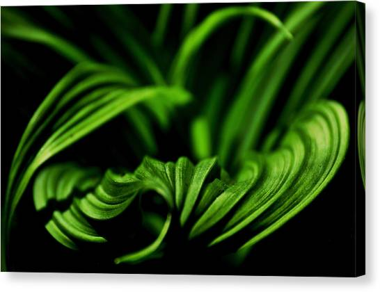 Green Curves Canvas Print by Mary Anne Williams