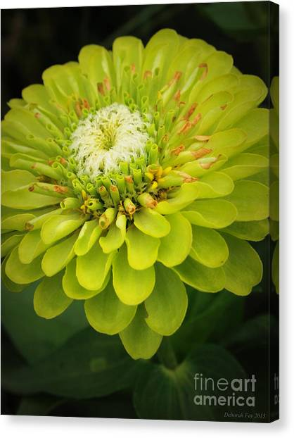 Green Dahlia Canvas Print