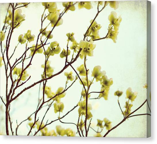 Dogwood Canvas Print - Green Dogwood by Lupen  Grainne