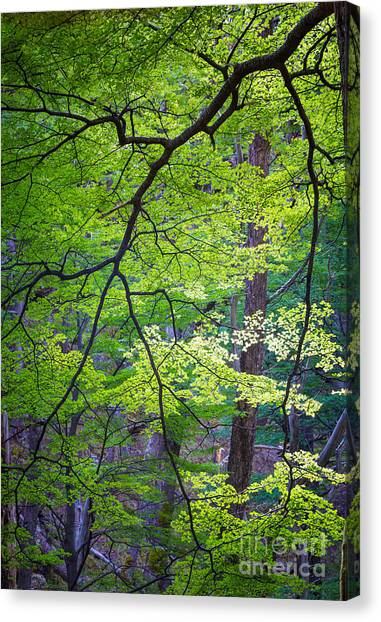 Argentinian Canvas Print - Green Explosion by Inge Johnsson
