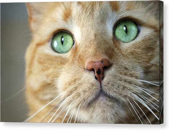 Bruce Willis Canvas Print - Green Eyes And Freckles by Bruce Willis