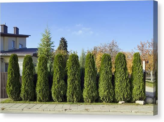 Green Fence Of Trees  Canvas Print by Aleksandr Volkov