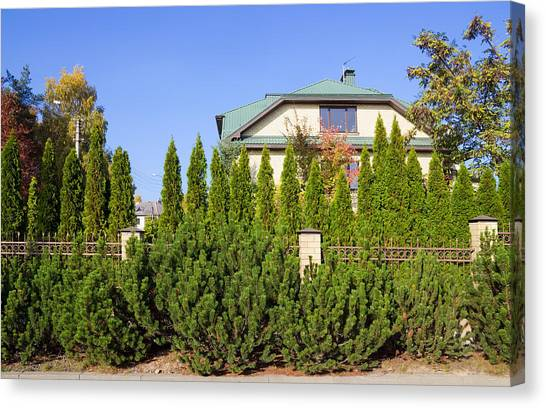 Green Fence Of Trees And Shrubs Canvas Print by Aleksandr Volkov