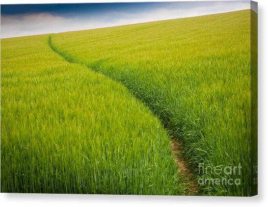 Green Field Canvas Print by Michael Hudson