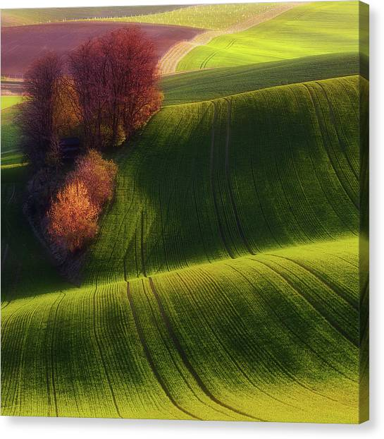 Rolling Hills Canvas Print - Green Fields by Piotr Krol (bax)
