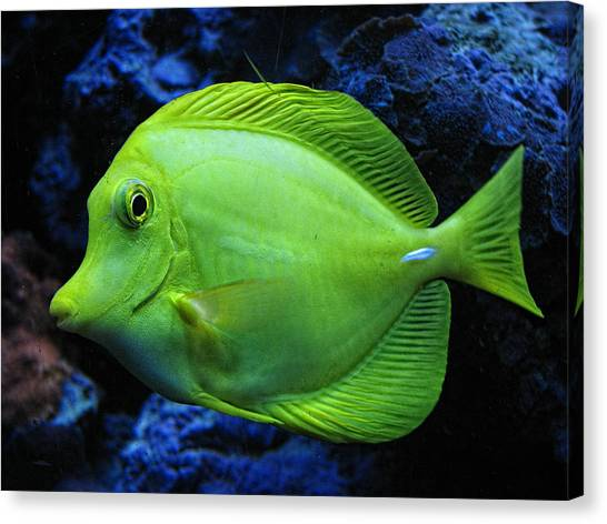 Green Fish Canvas Print