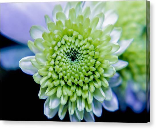 Green Flower Canvas Print by Amr Miqdadi
