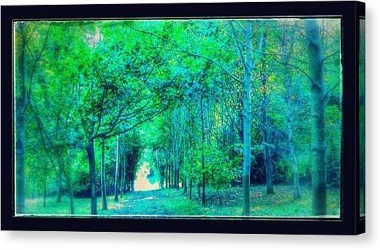 Forest Paths Canvas Print - Green Forest Path by Candy Floss Happy