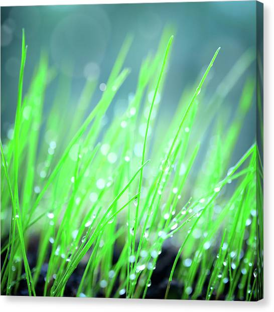 Blade Of Grass Canvas Print - Green Grass Background by Alubalish