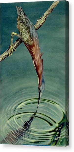Green Heron Canvas Print