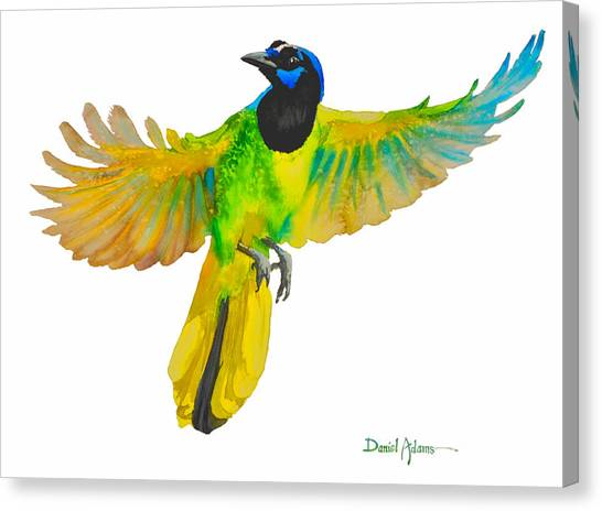 Da175 Green Jay By Daniel Adams Canvas Print