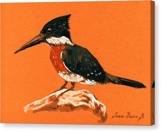 Kingfisher Canvas Print - Green Kingfisher by Juan  Bosco