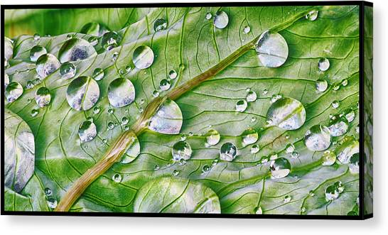 Green Leaf And Rain Drops Canvas Print