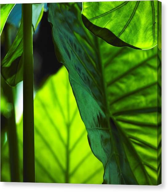 Green Leaf Trilogy I Canvas Print