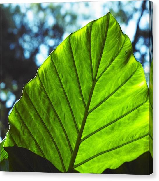 Green Leaf Trilogy II Canvas Print