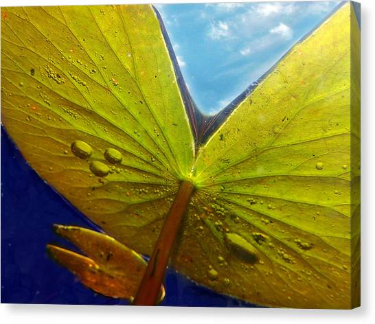 Green Lilly Pad Canvas Print