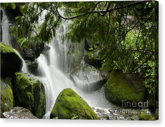 Green Moss Waterfall Canvas Print