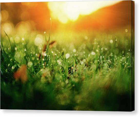 Blade Of Grass Canvas Print - Green Nature by Ppampicture