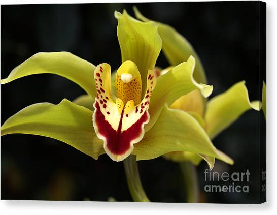 Green Orchid Flower Canvas Print
