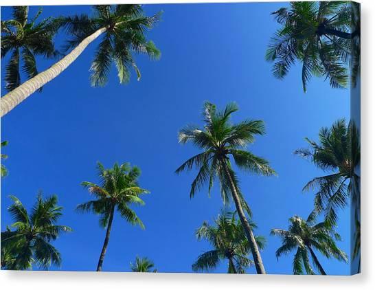 Green Palms Blue Sky Canvas Print