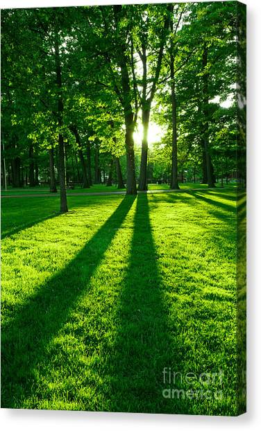Spring Trees Canvas Print - Green Park by Elena Elisseeva