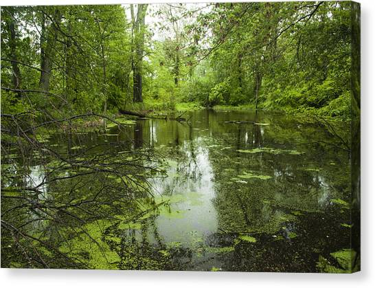 Green Blossoms On Pond Canvas Print