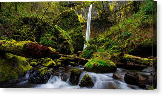 Limes Canvas Print - Green Seasons by Chad Dutson