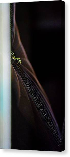 Green Spider Canvas Print