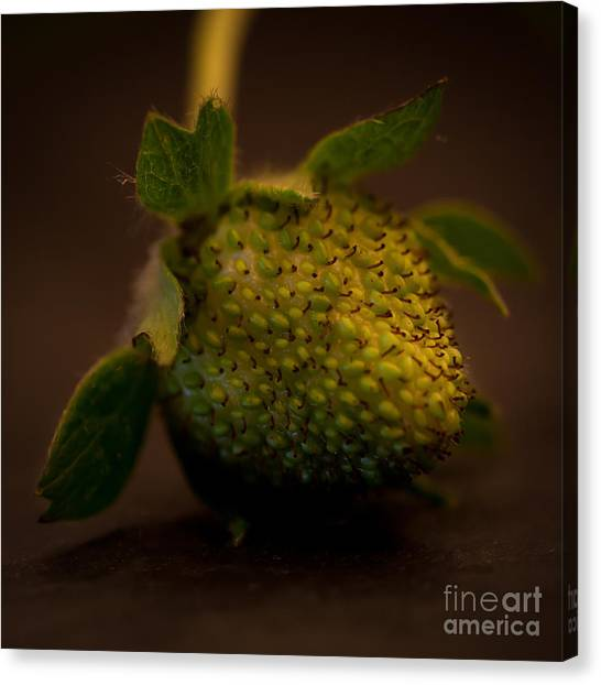 Green Strawberry Square Canvas Print by Patricia Bainter