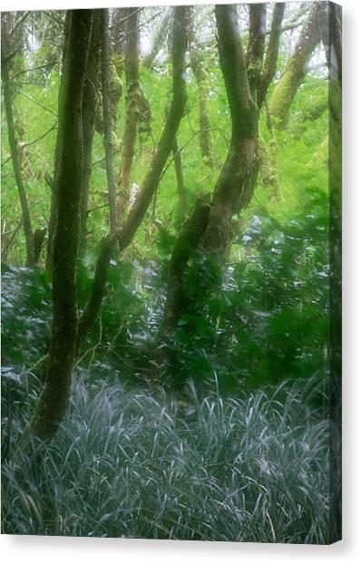 Green Study Canvas Print by Kim Lessel