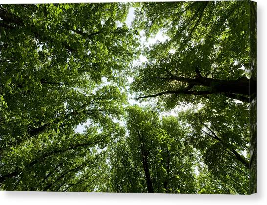 Green Summer Trees Canvas Print by Ioan Panaite