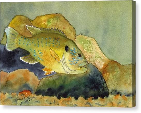 Green Sunfish Canvas Print by Paul Temple