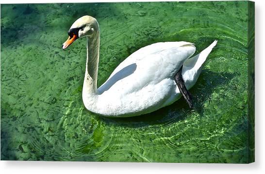 Green Swan Canvas Print