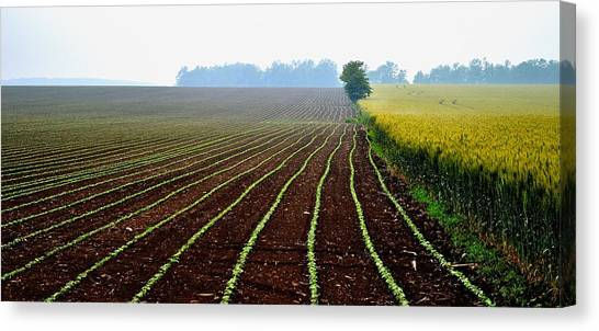 Green Track Meander Canvas Print