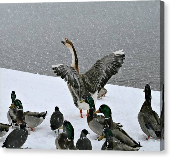 Green Valley Ducks Canvas Print