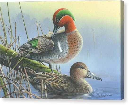 Green-winged Teal Ducks Canvas Print