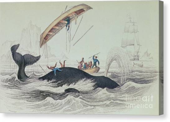 Blue Whales Canvas Print - Greenland Whale Book Illustration Engraved By William Home Lizars  by James Stewart