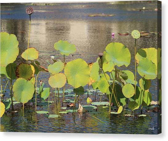 Greens On A Pond 3 Canvas Print by Mark Steven Burhart