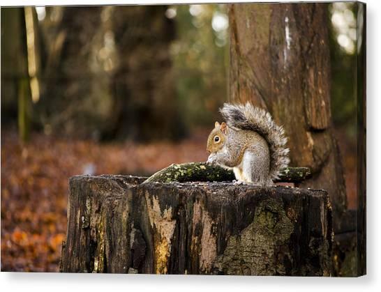 Grey Squirrel On A Stump Canvas Print