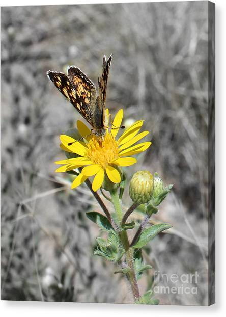 Greyed Butterfly Canvas Print