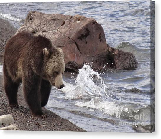 Bear Claws Canvas Print - Grizzly Bear At Yellowstone Lake by Dan Sproul