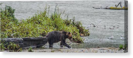 Grizzly Bear Late September 4 Canvas Print