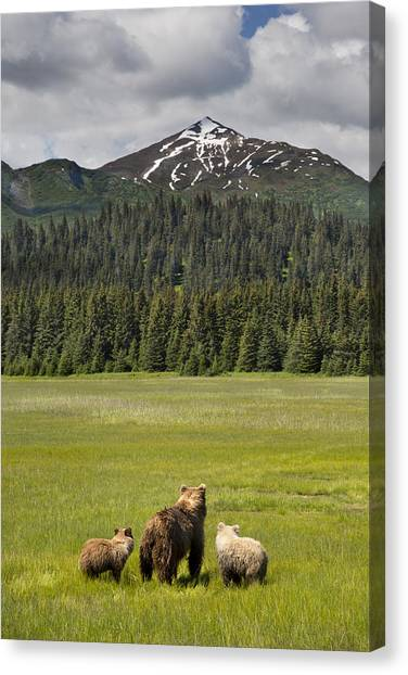 Canvas Print featuring the photograph Grizzly Bear Mother And Cubs In Meadow by Richard Garvey-Williams