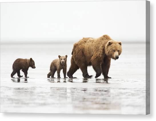 Grizzly Bear Mother And Cubs Lake Clark Canvas Print