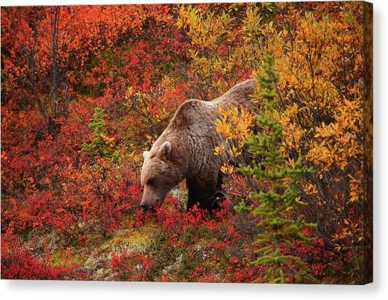 Grizzly Bear Canvas Print by Piriya Photography