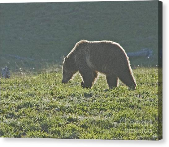 Grizzly Bear With Aura Canvas Print by Bob Dowling