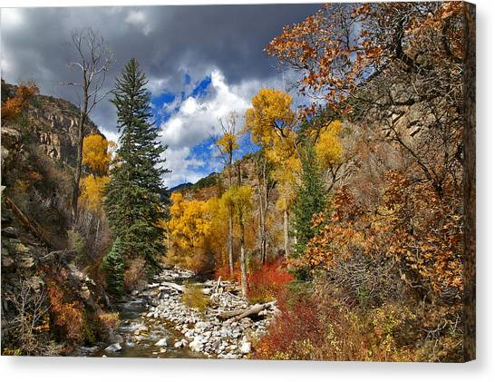 Grizzly Creek Cottonwoods Canvas Print